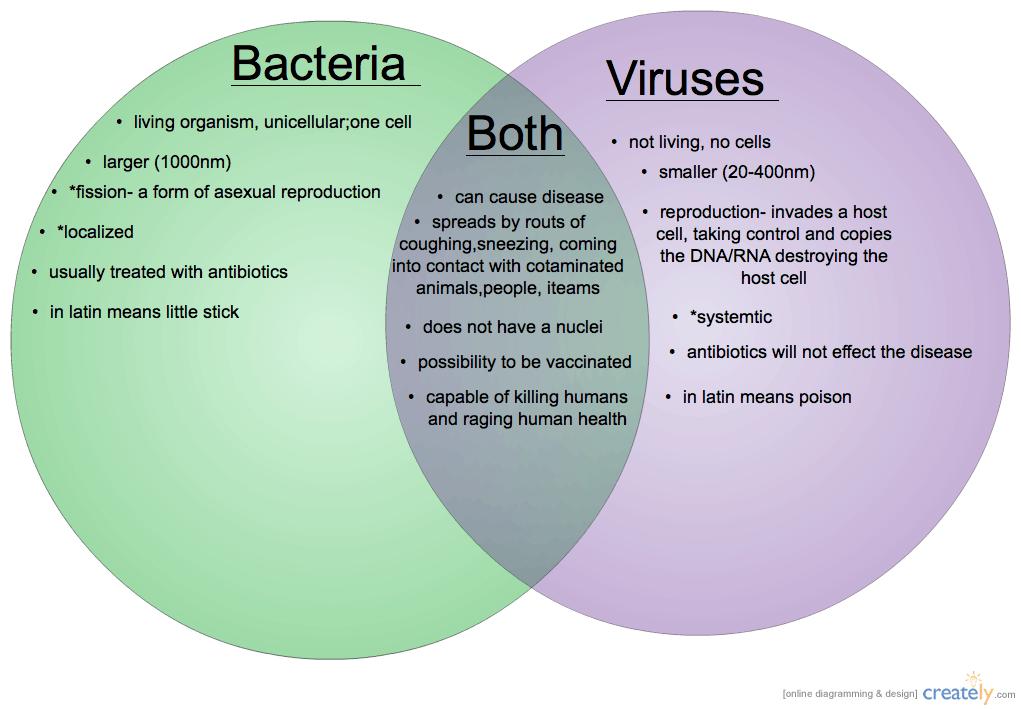 bakterie och virus
